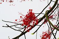 美丽的红色小花