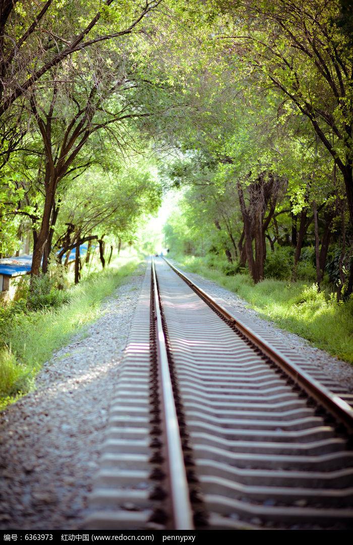 原创摄影图 自然风景 森林树林 校园铁路校园美景绿色夏天铁路  请您图片