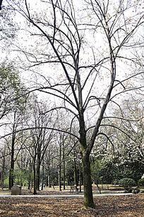 大树景观意向图