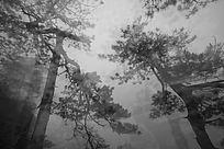 森林的高灌木