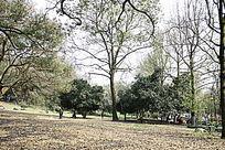 植物园景观图