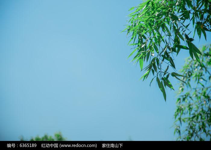 原创摄影图 动物植物 花卉花草 竹叶