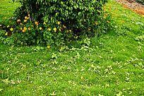 草地花卉绿花
