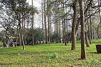 公园大草坪景观意向图