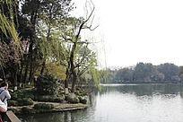 湖边的植物组团景观意向图