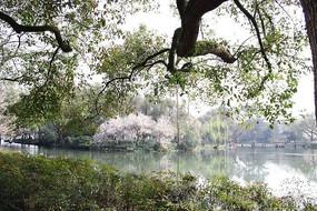 前景树景观摄影图