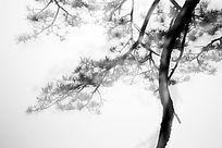 水墨松树林