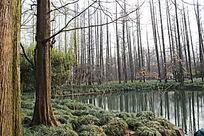 水杉林景观意向图