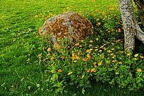 树下草地花卉