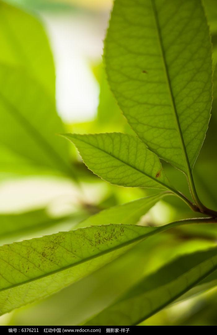 原创摄影图 动物植物 树木枝叶 树叶风景  请您分享: 红动网提供树木
