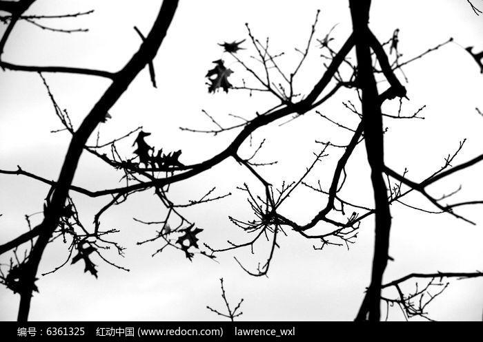 树枝剪影图片,高清大图_自然风景素材