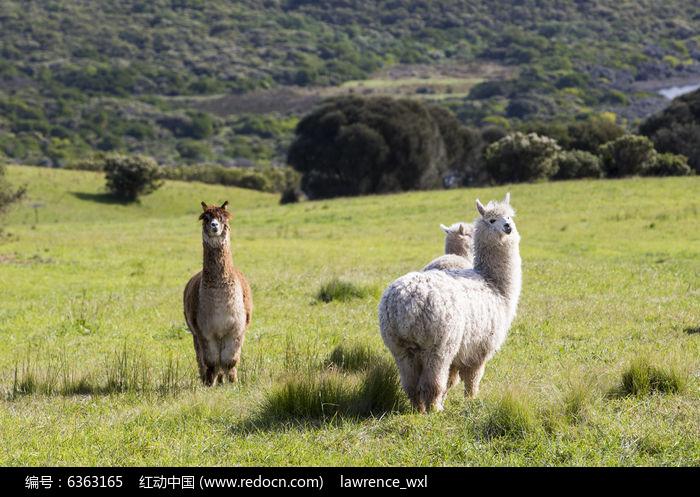 陆地动物素材