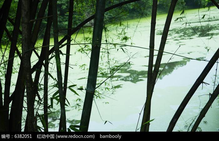 尖山寺的翠竹