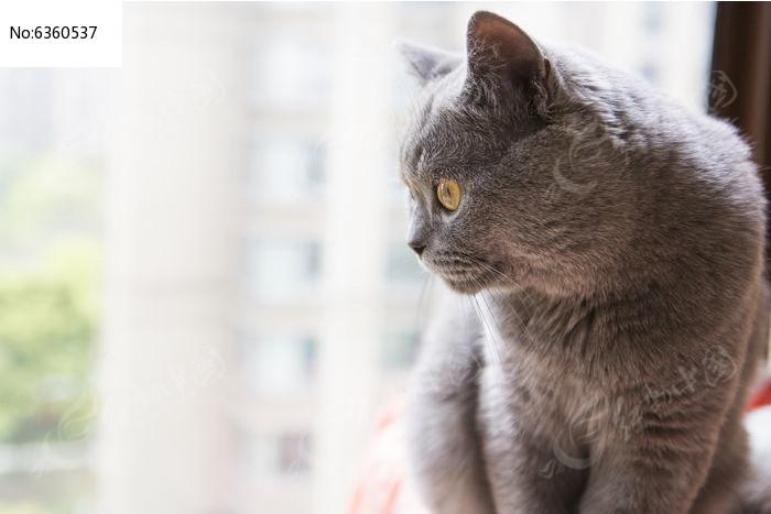 猫咪侧面照图片