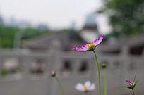 摇曳的小花