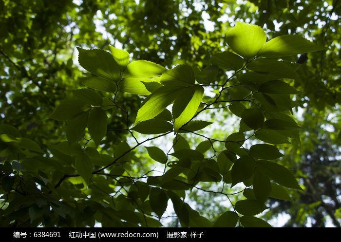 叶子风景图片,高清大图_树木枝叶素材