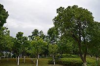 赣州滨江公园的树林