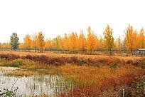 秋天的树木
