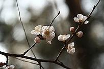 一簇唯美桃花