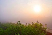 朝阳下的树林