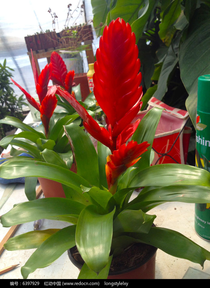 原创摄影图 动物植物 花卉花草 红花  请您分享: 红动网提供花卉花草