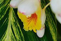 黄色的花蕾