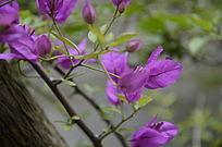 盛开的紫色花