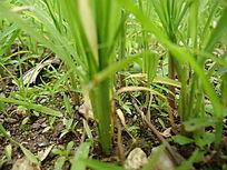 春意盎然的小草