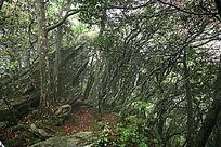 山上树林风景