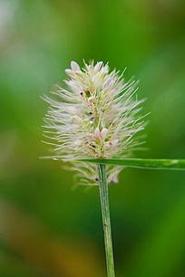 毛毛的花草