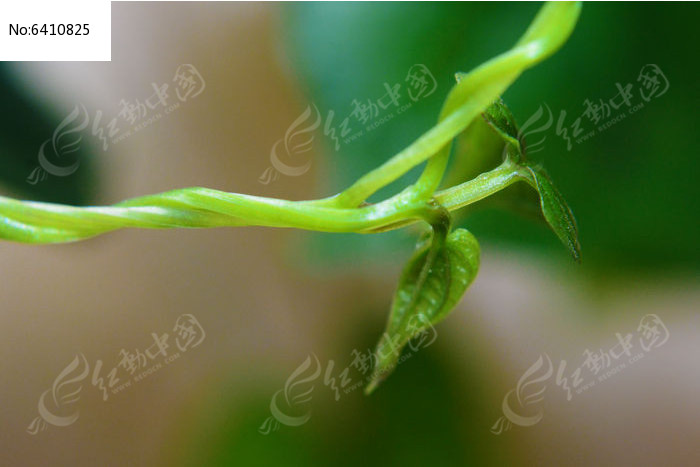 原创摄影图 动物植物 花卉花草 藤蔓与叶子  请您分享: 红动网提供