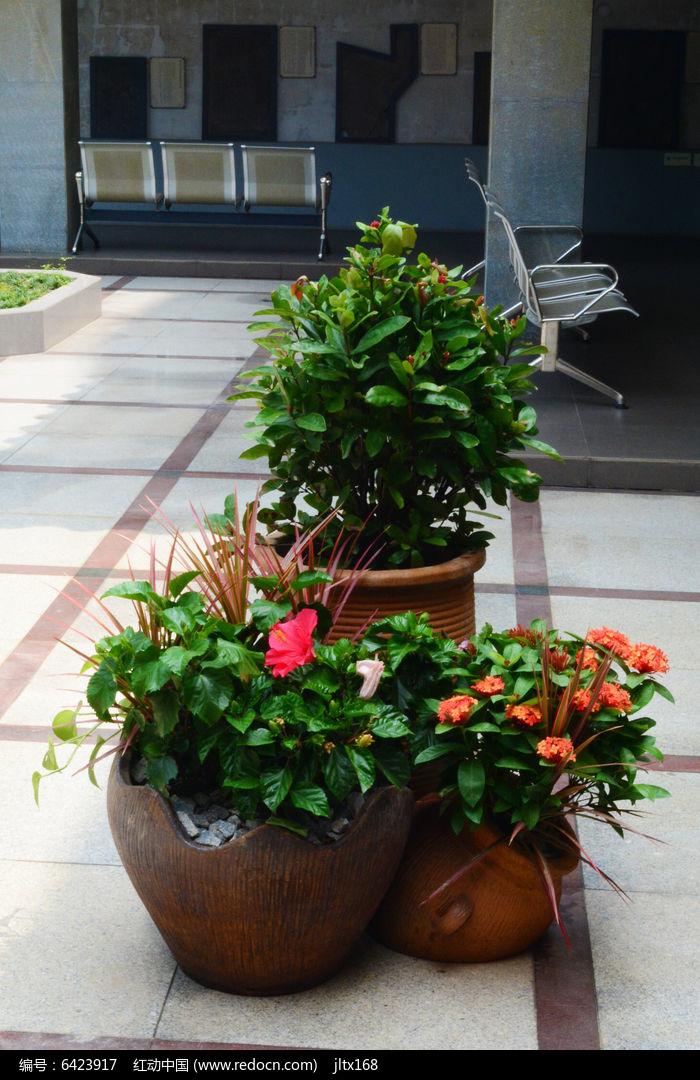 盆栽的艺术图片,高清大图_花卉花草素材