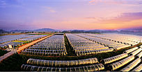 无公害供港蔬菜基地、千亩无公害瓜果基地