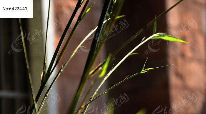 原创摄影图 动物植物 树木枝叶 小竹子  请您分享: 红动网提供树木