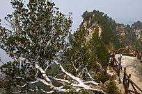 岩石中生长的白皮松