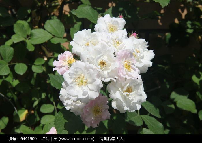 原创摄影图 动物植物 花卉花草 白色鲜花