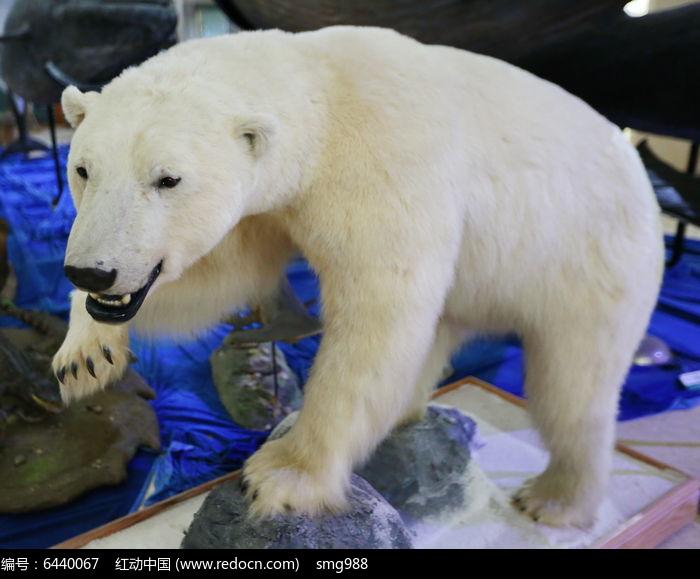 原创摄影图动物陆地标本动物濒危图片北极熊大全二次元玩偶动物植物兔子图片