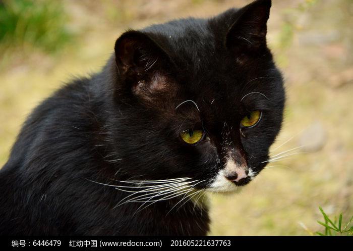 流浪猫特写图片,高清大图_陆地动物素材