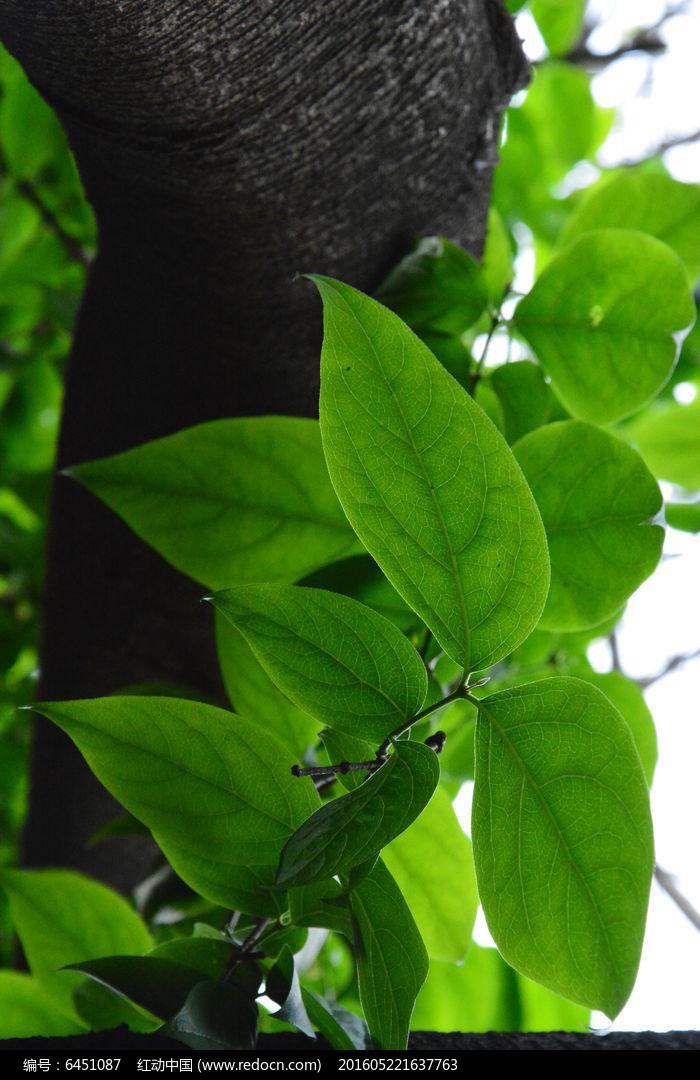 绿色图片,高清大图_树木枝叶素材