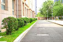 校园的绿色