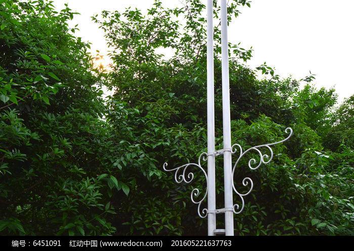 原创摄影图 动物植物 树木枝叶 枝叶  请您分享: 红动网提供树木枝叶