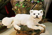 白色小狗标本