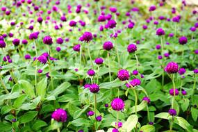 花卉农业种殖