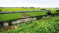 环保养殖场