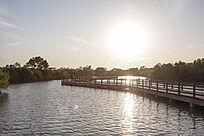 夕阳中的湿地栈道