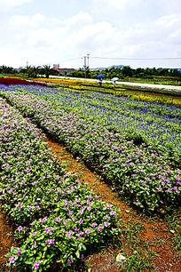 植物花卉种植