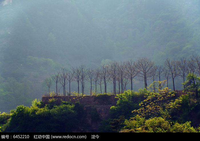 春天万仙山罗姐寨悬崖边的小树林