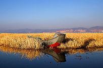 蒿草间的独木舟