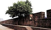 凤凰古城古城墙上的绿荫