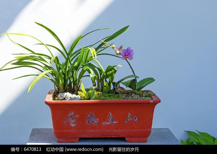 原创摄影图 动物植物 花卉花草 兰花盆景摄影